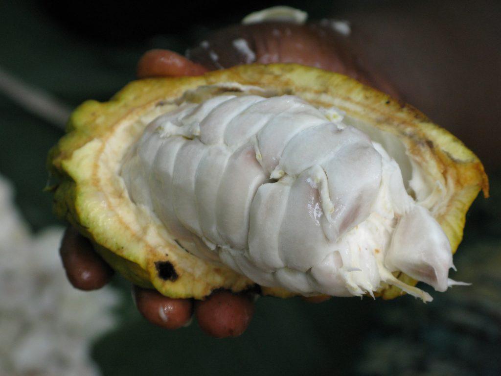energia dalla buccia del cacao