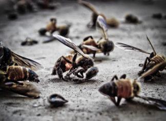 api-morte (002)