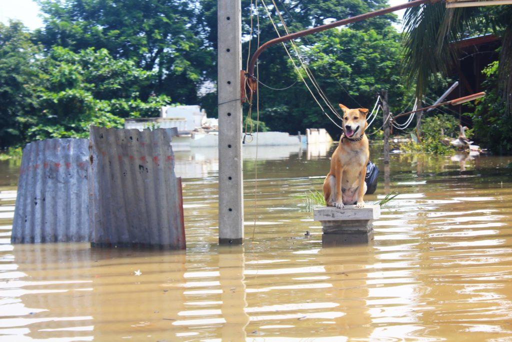 Inondazione con cane