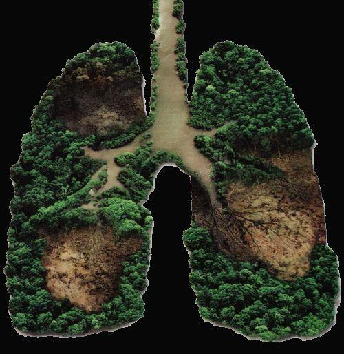 Amazzonia polmone
