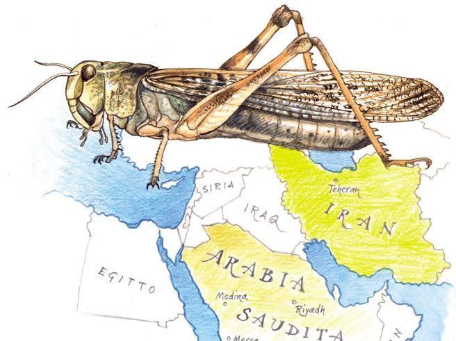 Invasione locuste