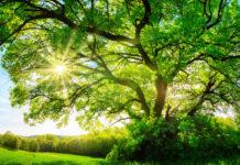 albero-Italia-covid