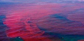 disastro-lago-Pyasino