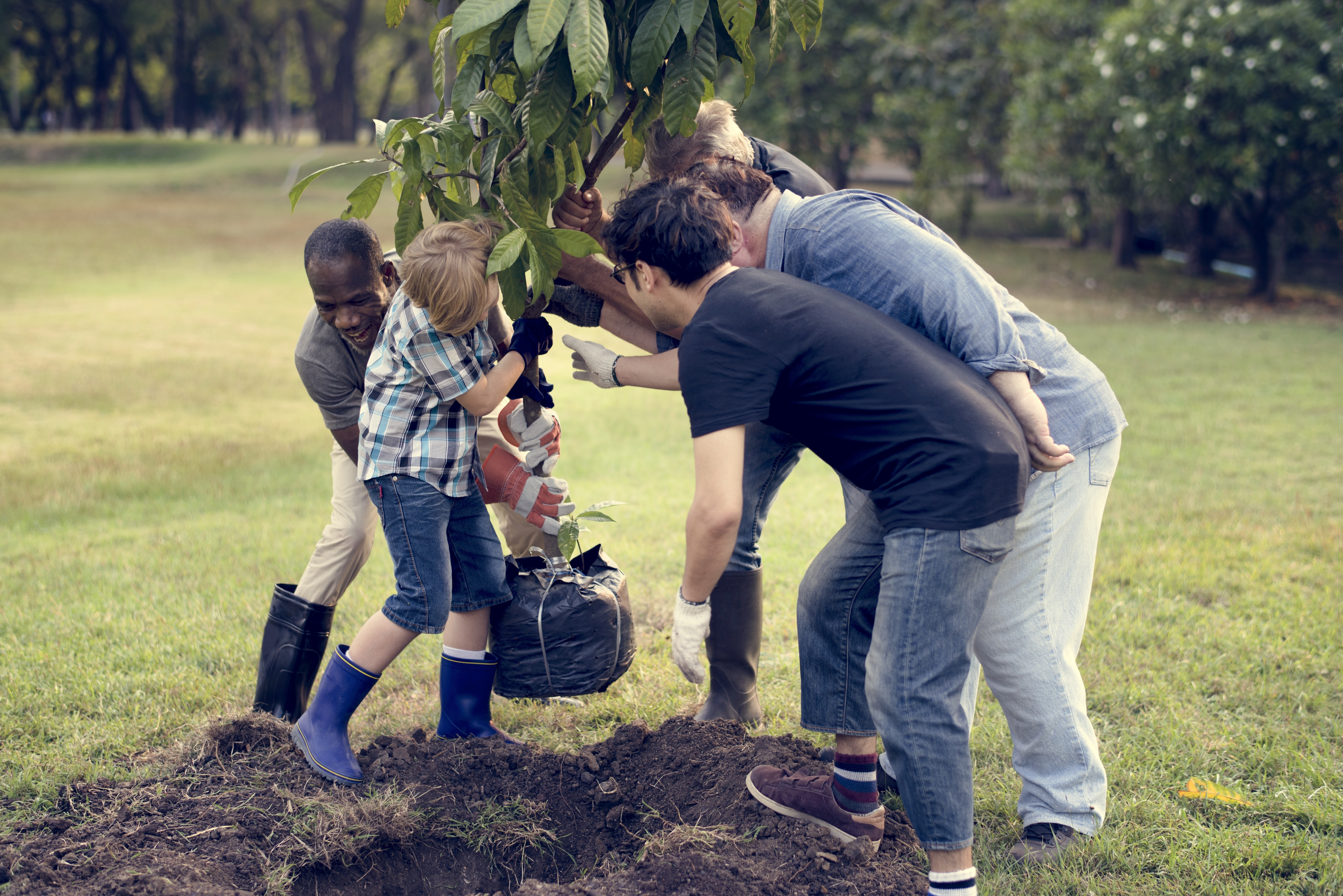 uomini piantano un albero